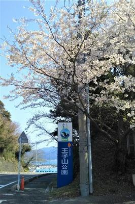 王子山公園の桜1.jpg