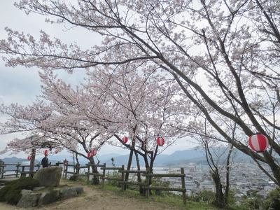 王子山公園の桜3.jpg