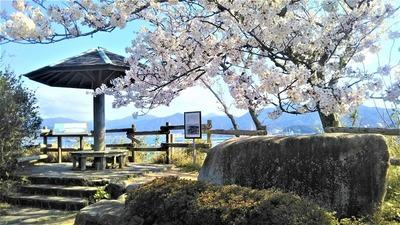 王子山公園の桜5.jpg