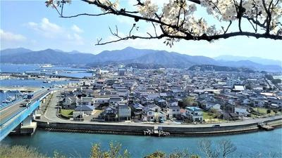 王子山公園の桜6.jpg