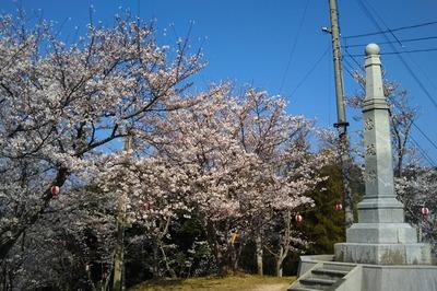 王子山公園の満開の桜2.jpg
