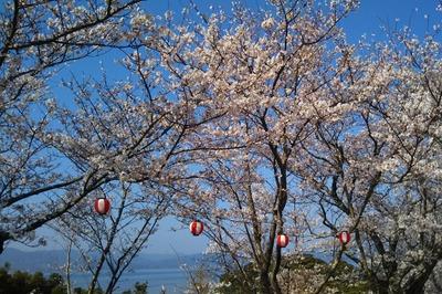 王子山公園の満開の桜3.jpg