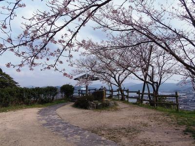 王子山公園広場の桜1.jpg
