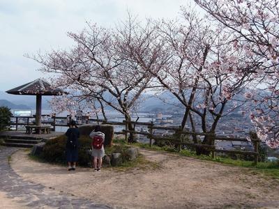 王子山公園広場の桜2.jpg
