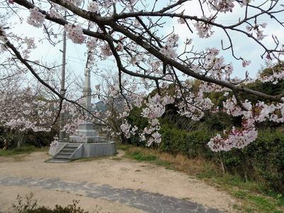 王子山公園広場の桜3.jpg
