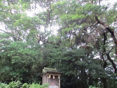 王子社と樹叢.jpg