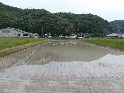 田んぼ1.jpg