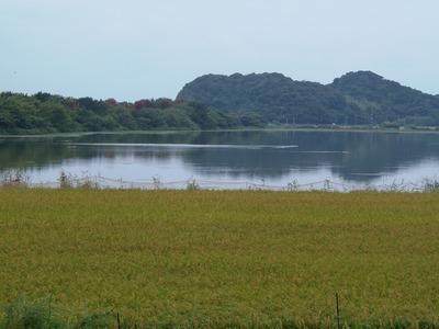 田んぼと青海湖と波の橋立.jpg