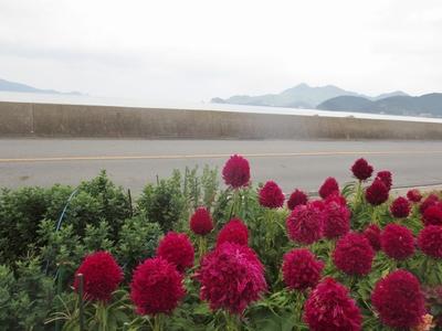 田屋の季節の花ケイト.jpg