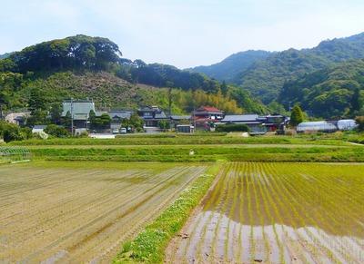 田植え後の清福寺付近.jpg