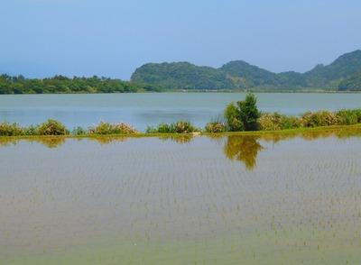 田植え後の青海湖付近.jpg