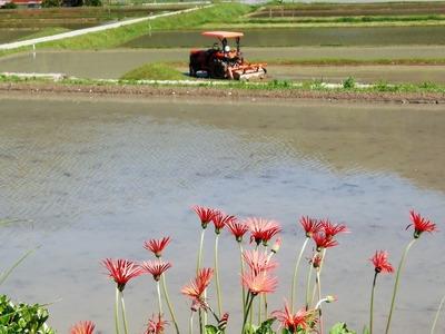 田植え準備と季節の花2.jpg