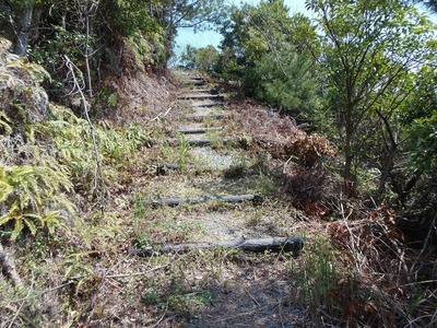 登山道2.jpg