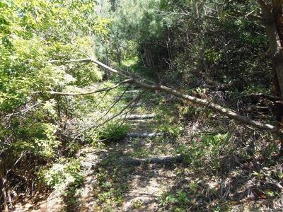 登山道に倒木1.jpg