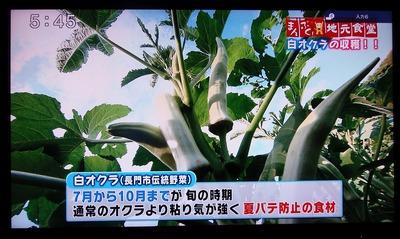 白オクラ(長門市伝統野菜).jpg