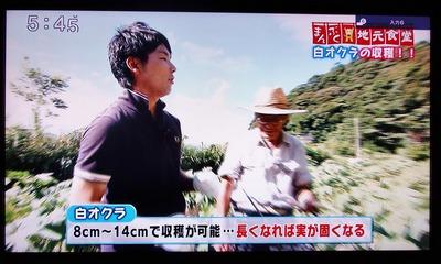 白オクラ8cm〜14cmで収穫可能.jpg