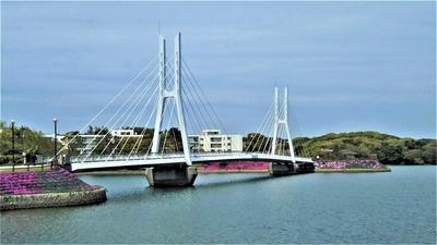 白鳥大橋とシバザクラ.jpg