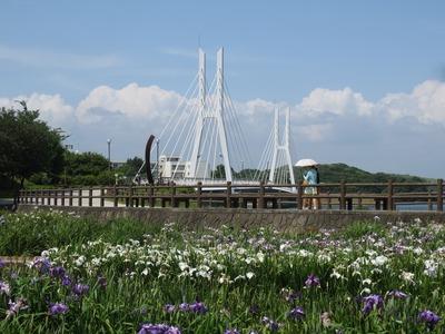 白鳥大橋と菖蒲園.jpg