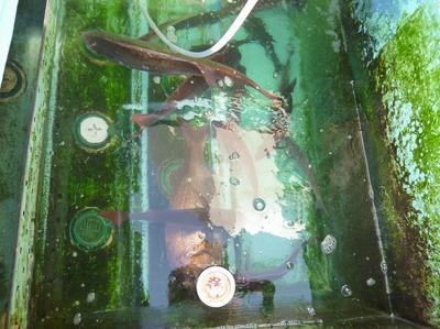 真鯛1.jpg