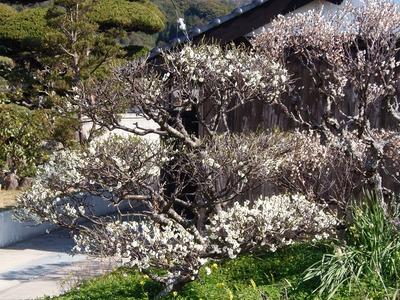 石田さんの季節の花.jpg