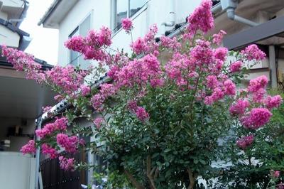 祇園祭の花1.jpg