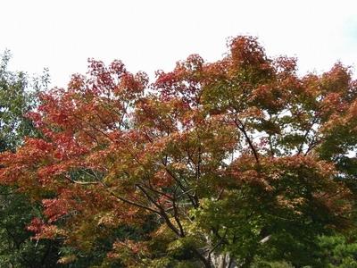 秋の色1.jpg