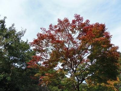 秋の色2.jpg