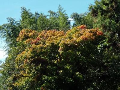 秋の色3.jpg