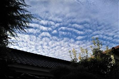 秋の雲1.jpg
