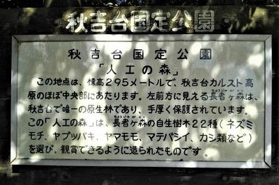 秋吉台国定公園人工の森説明.jpg