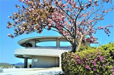 秋吉台展望台と季節の花.jpg