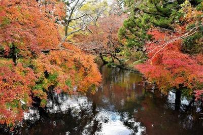 秋景色1.jpg