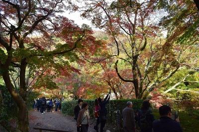 秋景色2.jpg