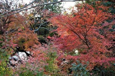 秋景色4.jpg