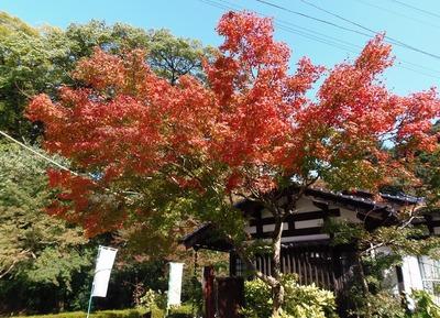 秋月の秋色1.jpg