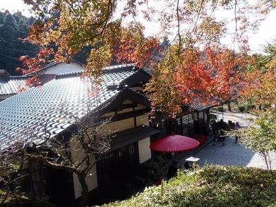 秋月の秋色2.jpg