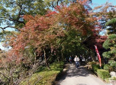 秋月の秋色4.jpg