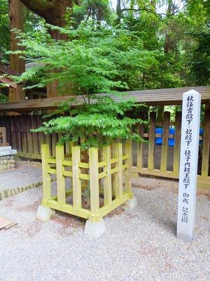秋篠宮殿下・妃殿下・佳子内親王殿下 御成 記念樹.jpg