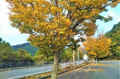 秋色1.jpg