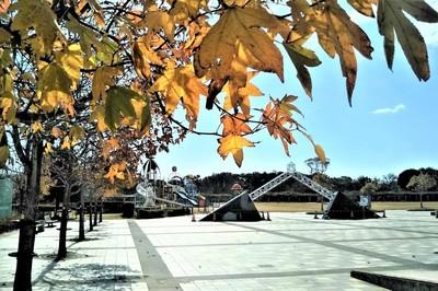 秋色の河原谷公園1.jpg