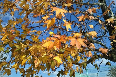 秋色の河原谷公園4.jpg