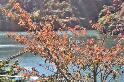 秋色の湯免ダム2.jpg