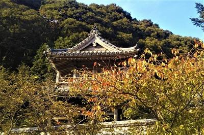 秋色の西園寺山門.jpg
