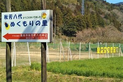 秋芳八代ぬくもりの里近くの麦畑.jpg