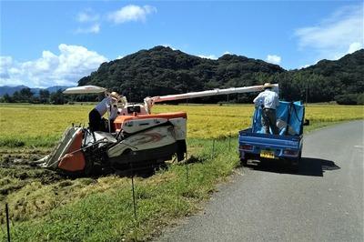 稲刈り2.jpg