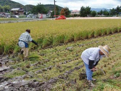 稲刈り4.jpg