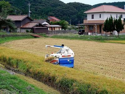 稲刈り・脱穀1.jpg