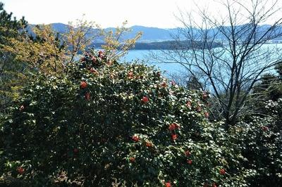 笠山山頂の椿1.jpg