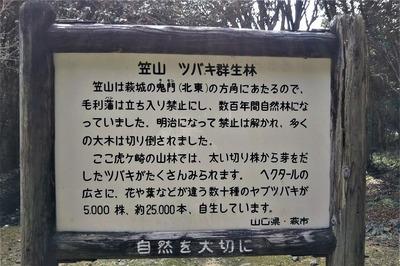 笠山椿群生林説明.jpg