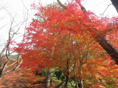 素晴らしい秋色.jpg